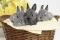 Коврик для мыши BURO BU-M40092 Кролики